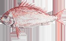Bluegill Bowfin